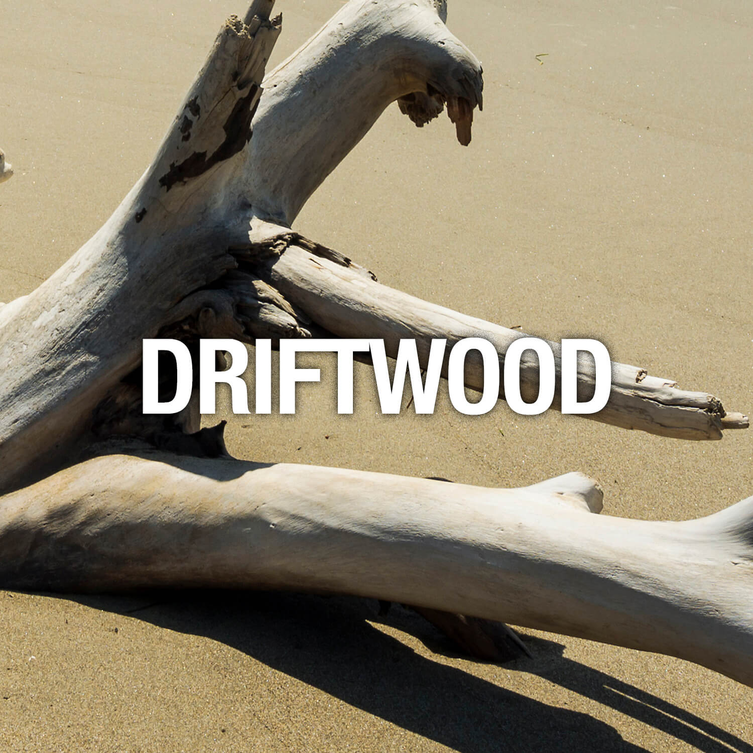 Curve Fragrance Notes DriftWood